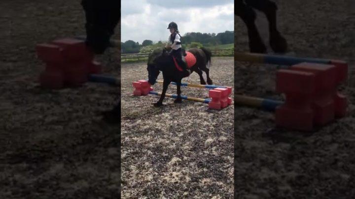 Échec du cheval 😂😂😂