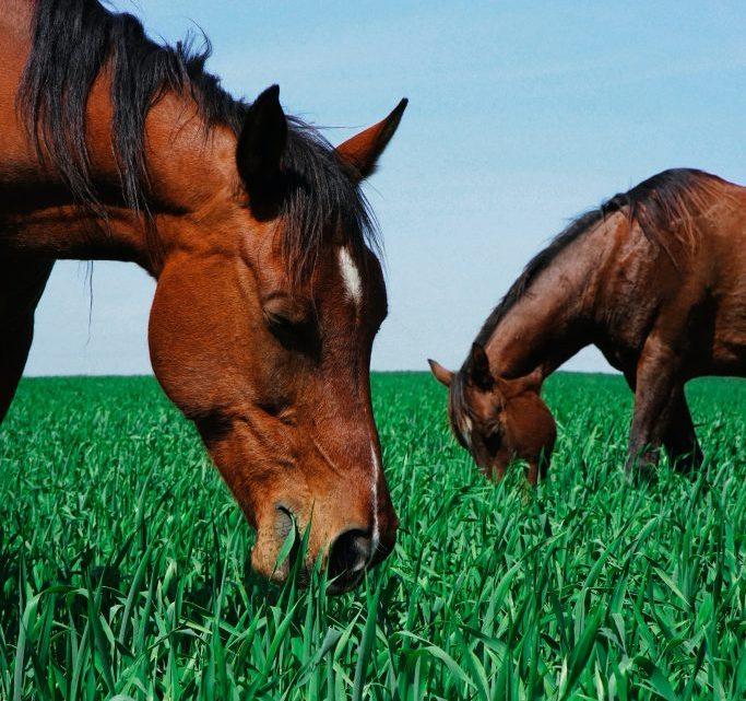 5 bénéfices pour votre cheval s'il vit en semi liberté