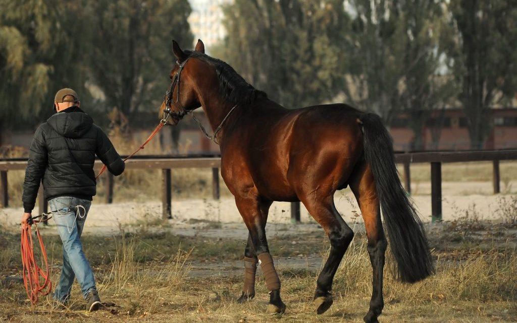 5 règles à suivre si vous souhaitez acheter un cheval