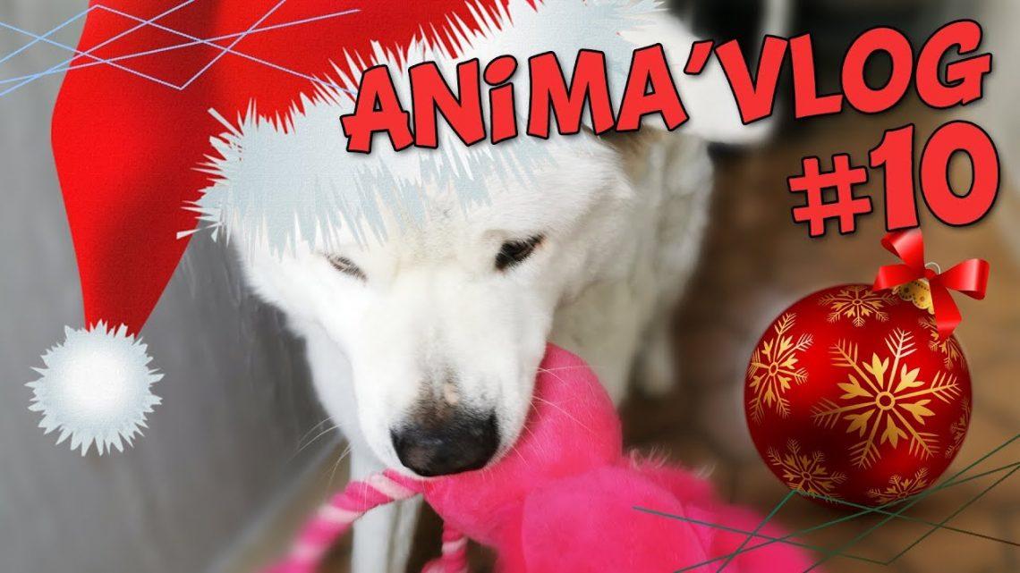 ANIMA'VLOG # 10 – JOUJOU de NOEL et CHEVAL en PYJAMA!