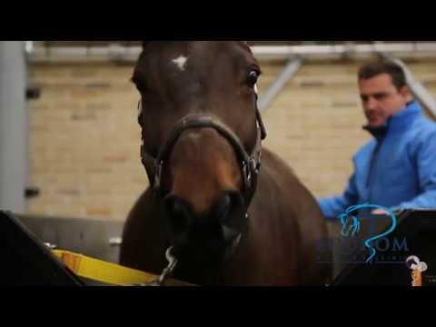 🤣Aquatrainer chevaux testé par des hommes