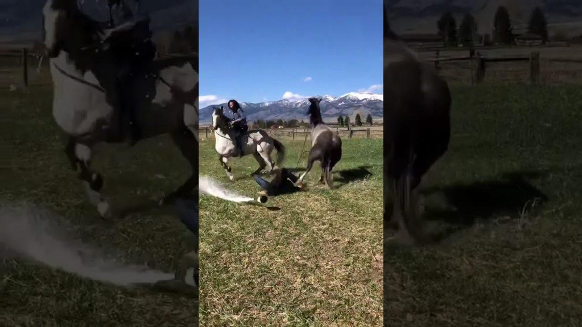Champagne à cheval échoue dur