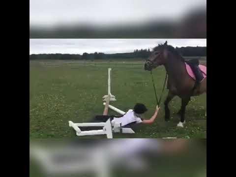 Cheval échoue et tombe (2)