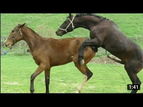 Cheval et chevaux se toilettent mutuellement Meeting Animal Planet Tj