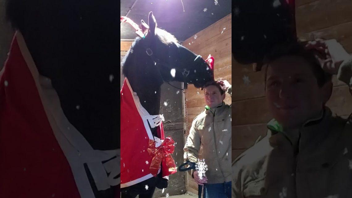 Échec de la photo de Noël des ruines du cheval #Shorts