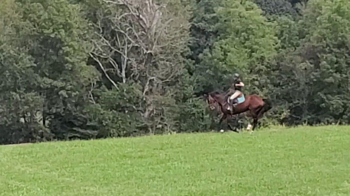 Échec du saut: 😳 Bucking jeune cheval