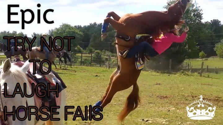 Essayez de ne pas rire – le cheval échoue