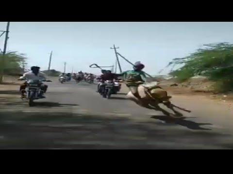 Horse Fail Sleep at Road comédie