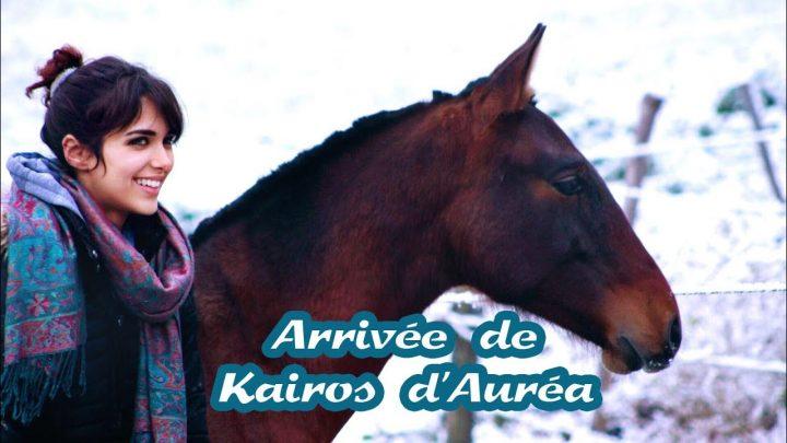 J'ai adopté un poulain !! – Arrivée de Kairos d'Auréa