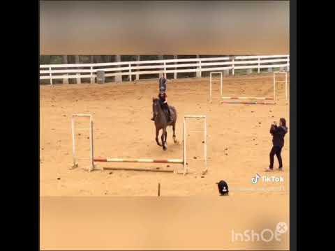 Le cheval Tiktok échoue