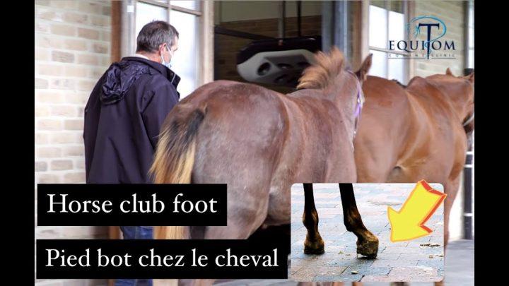 Mon poulain est pied bot / pied bot cheval