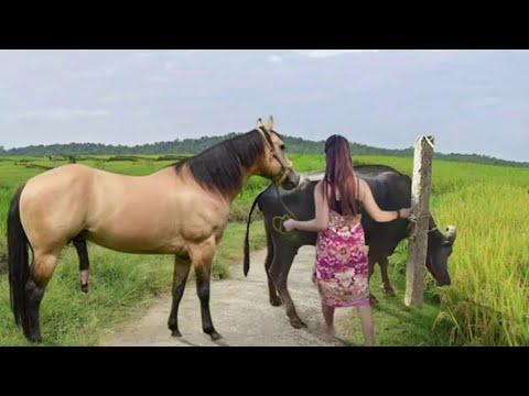OMG😱 Rencontre chevaux et buffles ||  Excellente réunion d'animaux ||  wow réunion de chevaux ||