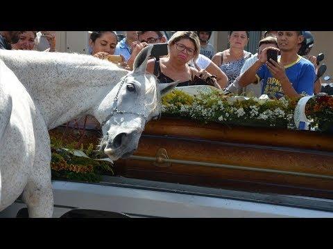 Pourquoi ce cheval est-il venu pleurer à un enterrement?  Les gens n'en croyaient pas leurs yeux.