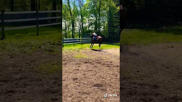 The best horse riding fail 😯