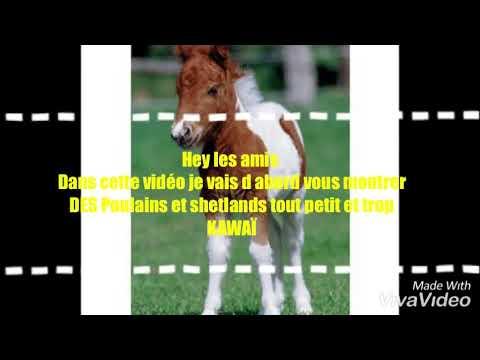 Top10 des chevaux les plus beau au monde+diaporama de poulain kawaï