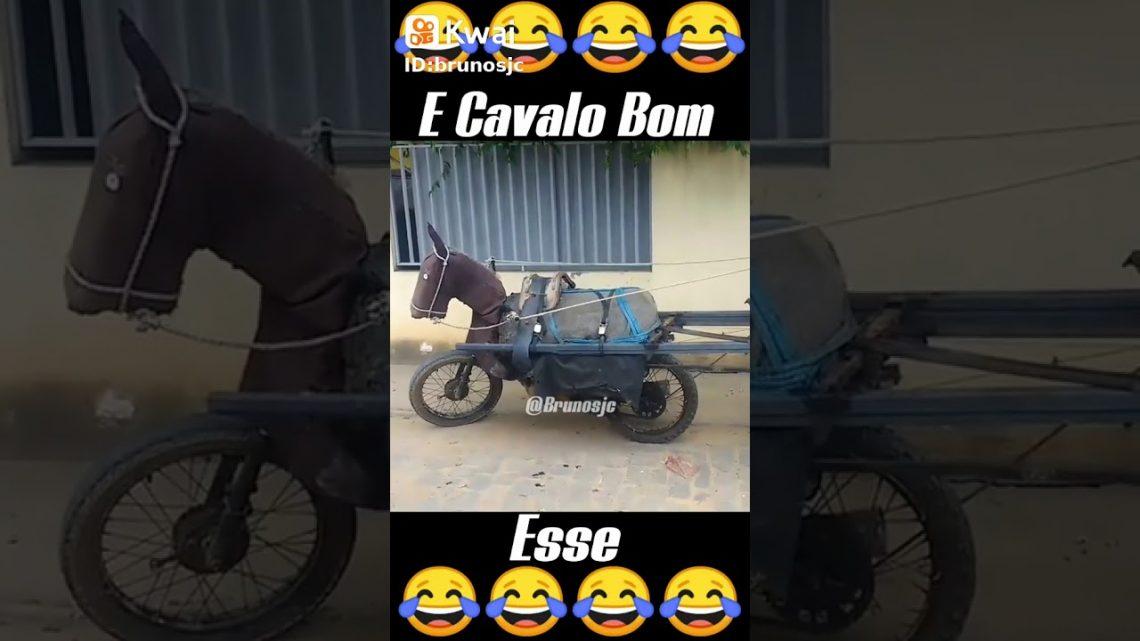 Voiture drôle |  Voiture à cheval |  Vélo de cheval |  Vélo incroyable |  Vélo drôle |  OMG