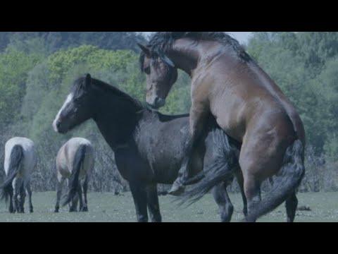 # _an_se_77 2 compilations de chevaux mâles série de mélanges 2021 🔥🔥❤️