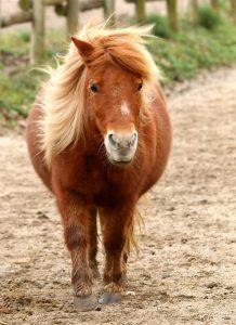 coloriage a imprimer de chevaux et de poney