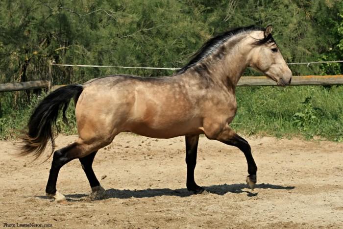 Coloriage Cheval Avec Cavalier