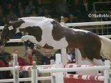coloriage cheval et poulain