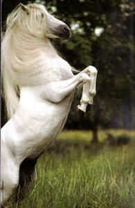 coloriage de chevaux sauvage