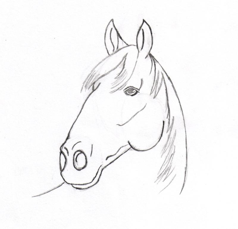 coloriage tete cheval