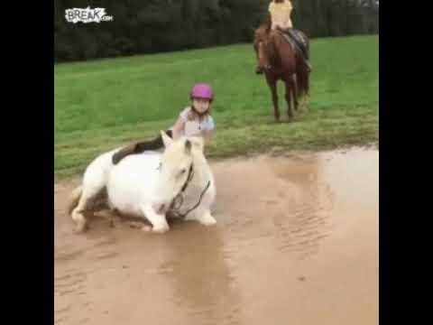 enfant à cheval 🐴 #meme #gif #fail #funny #gif original sans audio