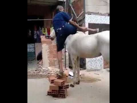 man trying to sit on horse 🐴 but fail.  funny gif  #meme #gif #fail #funny #gif original no audio