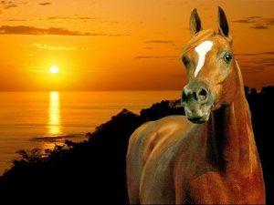 photo de cheval cheval du fleuve