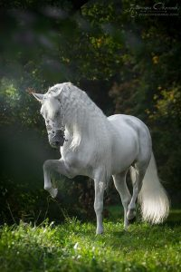photo de cheval jutland