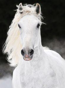 photo de cheval kabardin