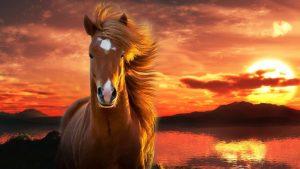 photo de cheval karabair