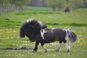 photo de cheval kwpn