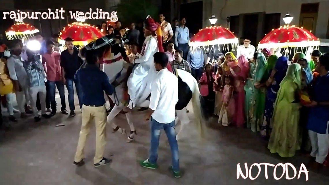 #rajpurohitwedding, danse du cheval incroyable    Danse du cheval     Cheval dansant     Vidéo Cheval    Cheval Marwari