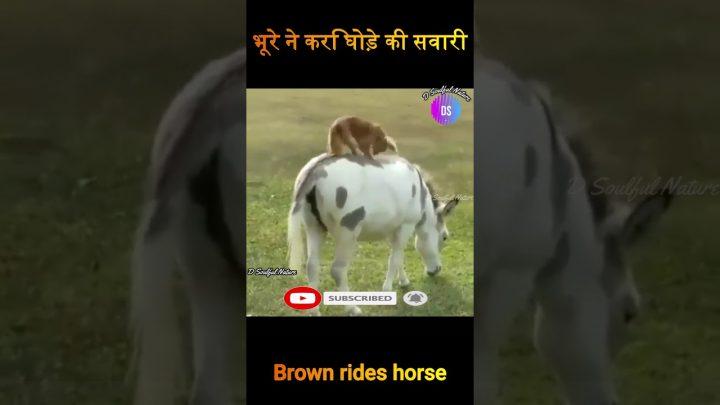 😳भूरे ने की घोडे की सवारी Browny monte très fortement à cheval #shorts #DSoulfulNature
