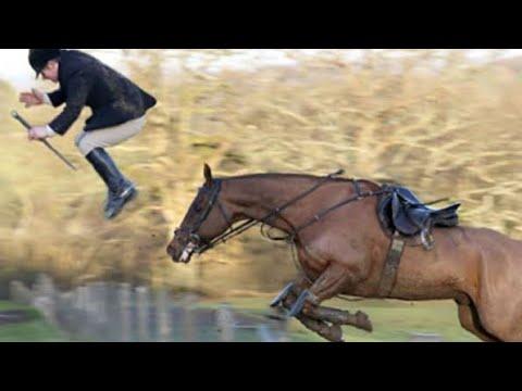 Le cheval échoue