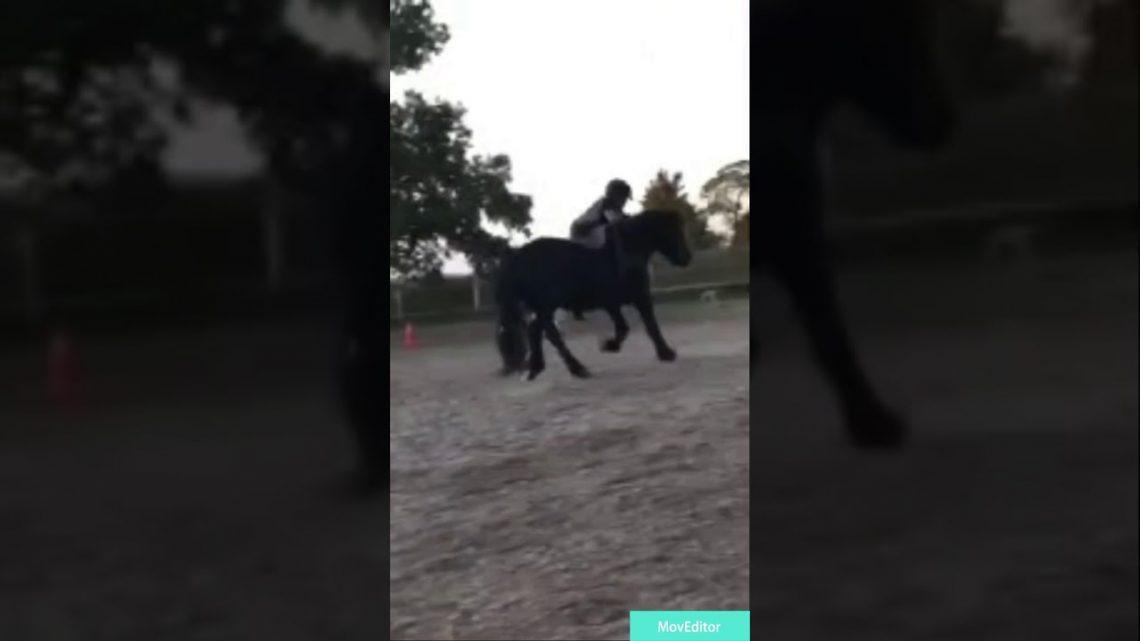 Le cheval échoue et tombe