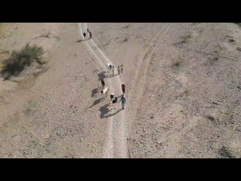 cheval stetus 😍 ||  équitation ||  cheval marwadi ||  cheval rajsthani ||  #rajsthan
