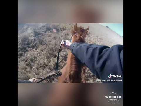# 3 Le cheval échoue La vidéo Van de Horse échoue