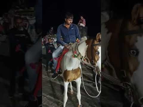 Cheval dansant |  Cheval Marwari |  #shorts |  Udta Teer |  Danse du cheval