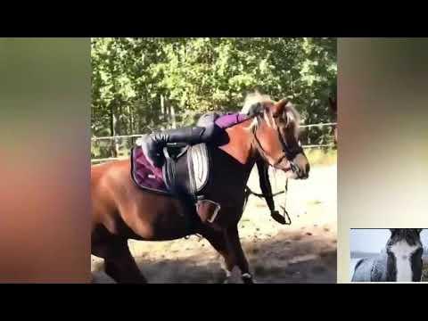 Chutes et échecs de chevaux (11)