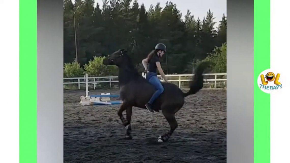 Compilation vidéo de chevaux d'fail mignonne et drôle Soo cute @ 2 HD