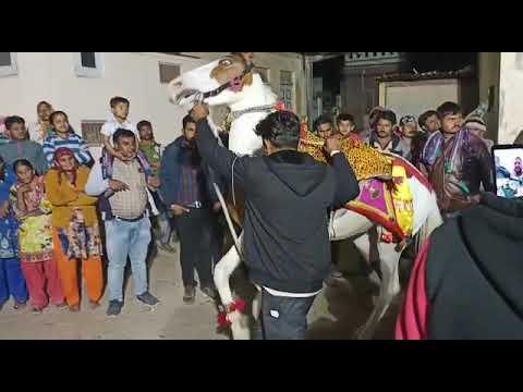 Danse du cheval |  Cheval Marwari |  #shorts |  Udta Teer |  Danse du cheval