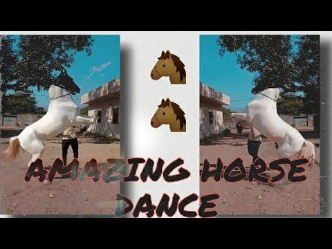 Danse du cheval incroyable || Danse du cheval ||  Cheval dansant ||  Vidéo de cheval || Cheval de Marwari