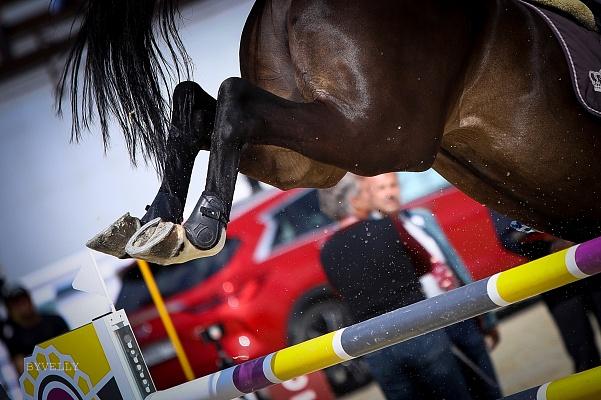 Décision d'introduire l'enregistrement annuel d'un cheval de sport annulée