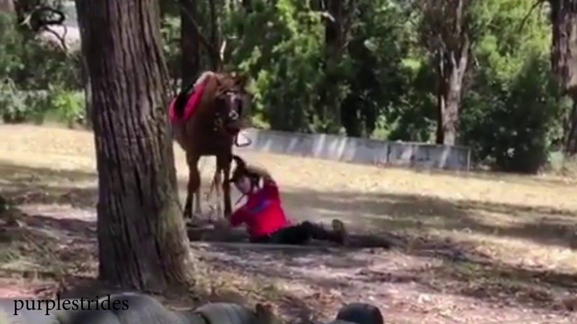 Funny Horse échoue et tombe 2019    Cavalier Equi