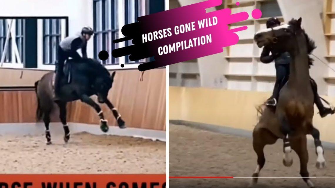 Horses Gone Wild – Compilation de chevaux drôles