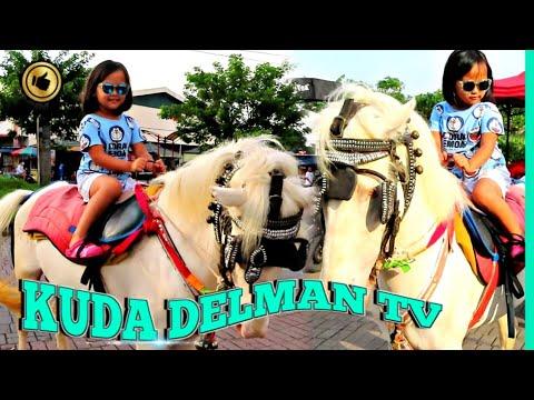 KUDA DELMAN TV 🔴 Jouer avec le cheval, Adorable moment cheval, Monter à cheval – Naik Kuda Bersama Papah