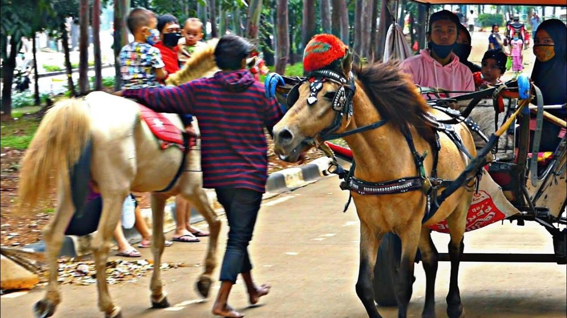 KUDA DELMAN TV 🔴 Pada Hari Minggu Aku naik Kuda Delman – Cheval Dokar Andong, Kretek, Hiburan Kuda