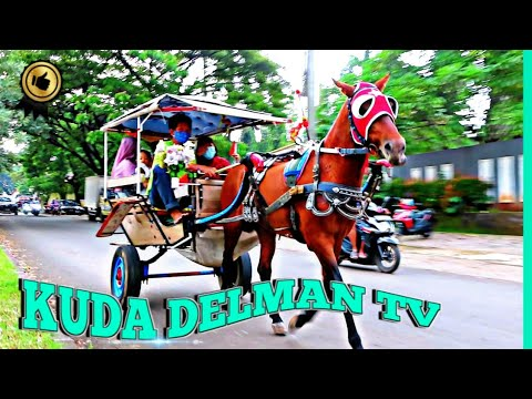 KUDA DELMAN TV 🔴 monter à cheval en famille – Delman – Lagu Kuda Delman – Jalan Jalan Naik Kuda Delman